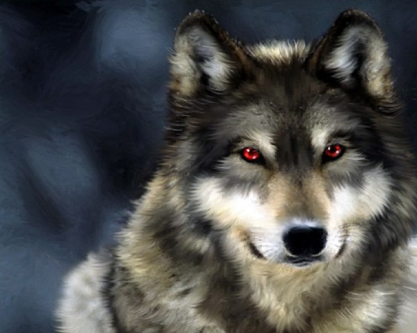 Wolves_wolf_great_wallpapers_for_your_deskop