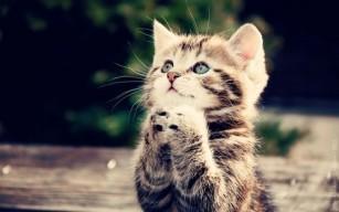Cute-Cats-cats-33440930-500-313