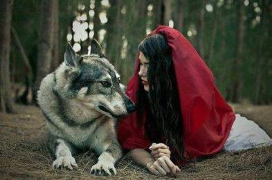 red and wolf
