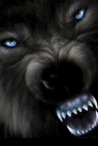 wolves-and-werewolves-fire-and-ice-the-wolf-pack-23828159-240-320